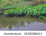 deep swamps  surrounded by... | Shutterstock . vector #1028288611