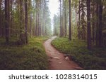 a path in a fairy forest in the ... | Shutterstock . vector #1028314015