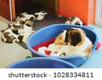 saint bernard puppies sleeping... | Shutterstock . vector #1028334811