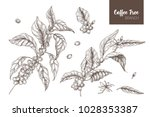 bundle of elegant botanical... | Shutterstock .eps vector #1028353387