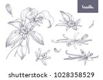 bundle of natural drawings of... | Shutterstock .eps vector #1028358529