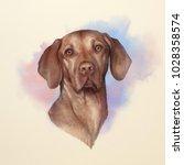 Illustration Of A Vizsla Dog....