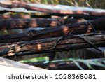 Small photo of Decomposing Black Wattle (acacia mearnsii) rough pole structure detail close-up