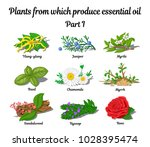 plants from which produce... | Shutterstock .eps vector #1028395474