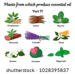plants from which produce... | Shutterstock .eps vector #1028395837