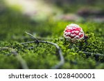 Small Red Mushroom Hidden In...