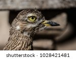 close up of a spotted thick... | Shutterstock . vector #1028421481