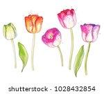 ink  pencil  watercolor tulips... | Shutterstock .eps vector #1028432854