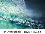 white transparent skeleton leaf ... | Shutterstock . vector #1028446165