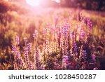 glade of wild blossom flowers...   Shutterstock . vector #1028450287