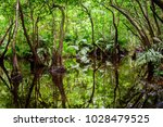 tropical vegetation in a swamp  ... | Shutterstock . vector #1028479525