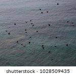 western jackdaws  coloeus... | Shutterstock . vector #1028509435