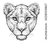 Hand Drawn Portrait Of Lioness...