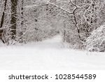 beautiful winter forest with a...   Shutterstock . vector #1028544589