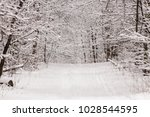 beautiful winter forest with a...   Shutterstock . vector #1028544595