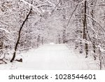 beautiful winter forest with a...   Shutterstock . vector #1028544601