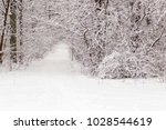 beautiful winter forest with a...   Shutterstock . vector #1028544619