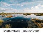 Summer Landscape. Swamp  Marsh...