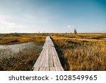 summer landscape. swamp  marsh  ...   Shutterstock . vector #1028549965