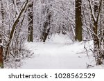 beautiful winter forest with a...   Shutterstock . vector #1028562529