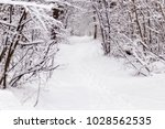 beautiful winter forest with a...   Shutterstock . vector #1028562535