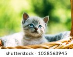 Stock photo small kitten with blue ayes in basket on garden closeup animal photography 1028563945