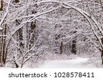 beautiful winter forest with a...   Shutterstock . vector #1028578411