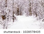 beautiful winter forest with a...   Shutterstock . vector #1028578435