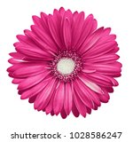 Pink White Gerbera Flower ...
