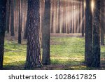 sunbeams in the forest | Shutterstock . vector #1028617825