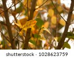 abstract nature concept... | Shutterstock . vector #1028623759