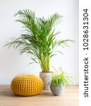 bright living room with palm ... | Shutterstock . vector #1028631304