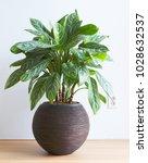 light living room with... | Shutterstock . vector #1028632537