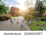 Small photo of Pigeons in the park of Gdansk Poland