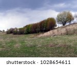 vegetation with grass on field...   Shutterstock . vector #1028654611