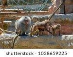 paignton  uk   june 17  2010 ... | Shutterstock . vector #1028659225