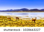view on lagoon pastos grandes... | Shutterstock . vector #1028663227
