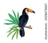tropical bird toucan is sitting ... | Shutterstock .eps vector #1028673067