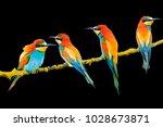 beautiful exotic birds isolated ... | Shutterstock . vector #1028673871