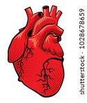 heart vector drawing | Shutterstock .eps vector #1028678659