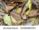 pile of leaves | Shutterstock . vector #1028680351
