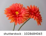 close up on artificial orange... | Shutterstock . vector #1028684065