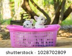 cute little french bulldog on... | Shutterstock . vector #1028702809