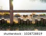 stray cats in kadoike park   Shutterstock . vector #1028728819