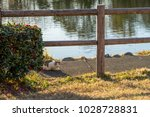 stray cats in kadoike park   Shutterstock . vector #1028728831