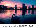 swan in the water of a dramatic ... | Shutterstock . vector #1028731267