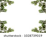 leaves flacourtia background | Shutterstock . vector #1028739019