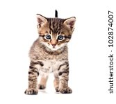 Stock photo striped kitten isolated on white background 102874007