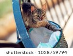 Homeless Striped Cat With Gree...