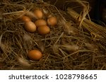 eggs are human food. protein is ... | Shutterstock . vector #1028798665